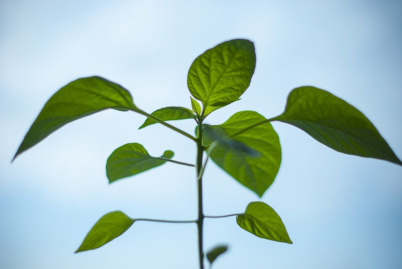 nature-plant-morning-green-large